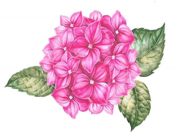 Kaart van roze hortensia bloemen.