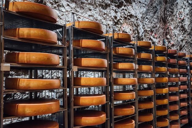 Kaaswielen op de planken in de fabriek voor de productie van zuivelproducten