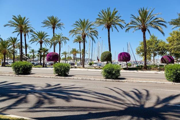 Kade in palma de mallorca. kade in palma de mallorca op een zonnige dag met uitzicht op de haven en veel goed verzorgde en elegant gesnoeide bomen en struiken.