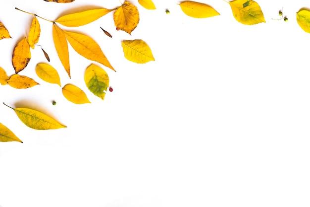 Kader dat van de herfst droge bladeren op witte achtergrond wordt gemaakt.