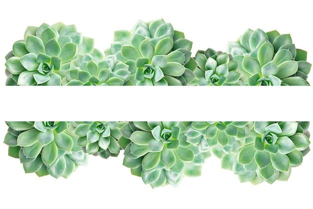 Kader van cactus succulente installatie die op wit wordt geïsoleerd