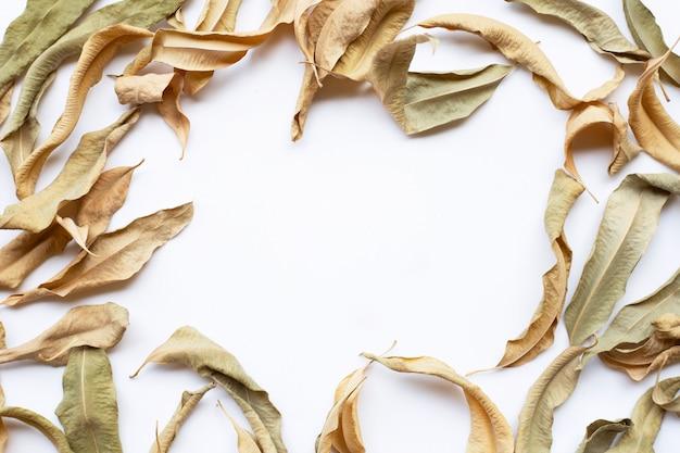 Kader van eucalyptus droge bladeren met exemplaarruimte op wit