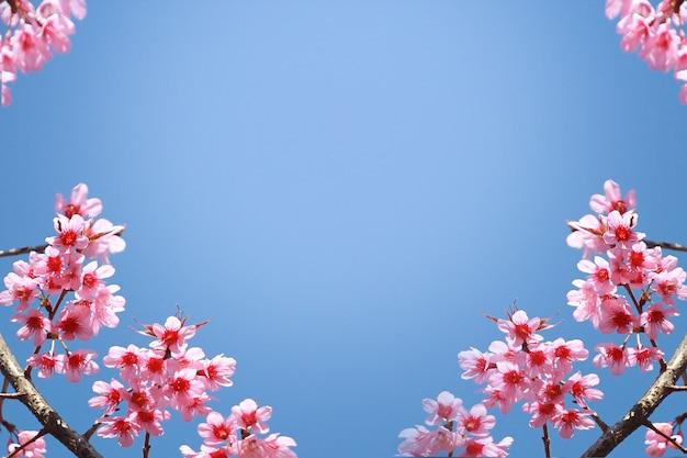 Kader van takken van tot bloei komende kers tegen achtergrond van blauwe hemel en fladderende vlinders in de lente op aard in openlucht