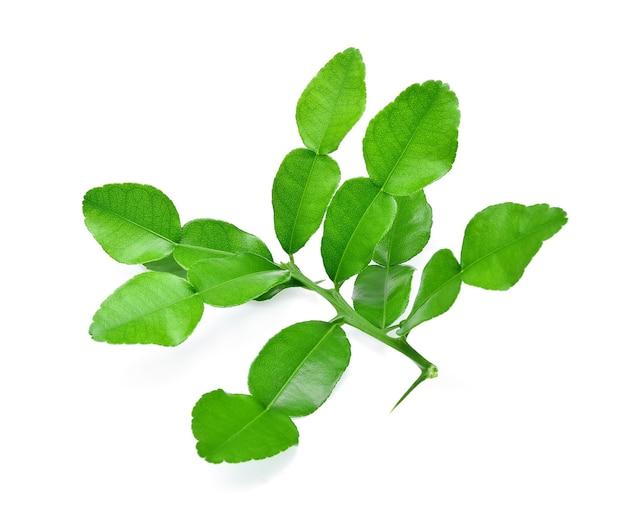Kaffir limoenblad geïsoleerd op een witte achtergrond