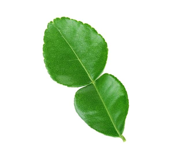 Kaffir limoenblad geïsoleerd op witte achtergrond