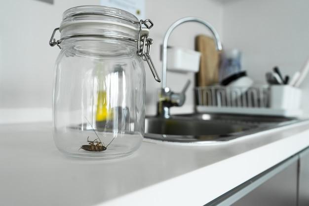 Kakkerlak in een glazen pot in de keuken