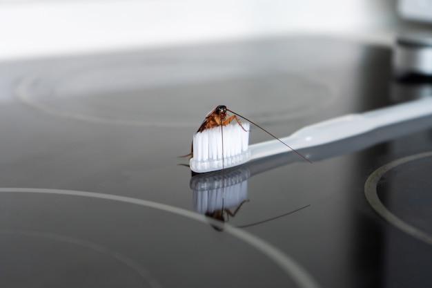 Kakkerlak op een tandenborstel. gebrek aan hygiëne. vreselijke sanitaire omstandigheden