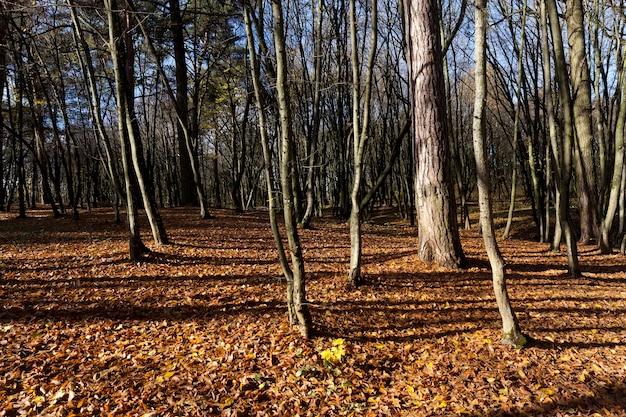 Kale bomen groeien in herfstpark aan het eind van de herfst, bewolkte mistige weg, kale loofbomen, kamperen