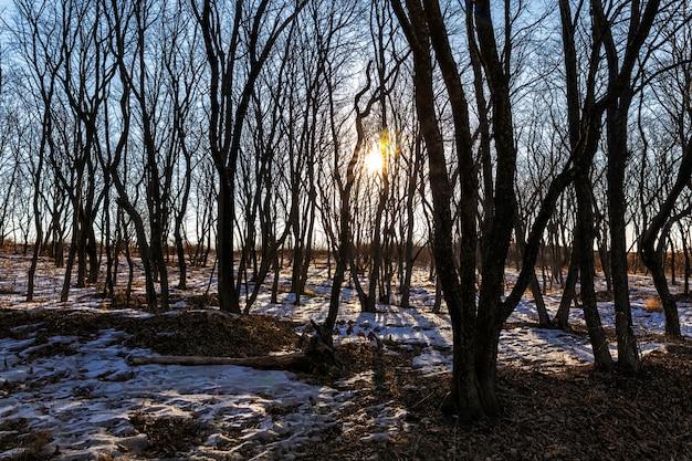 Kale bomen in de winter verlicht door het zonlicht