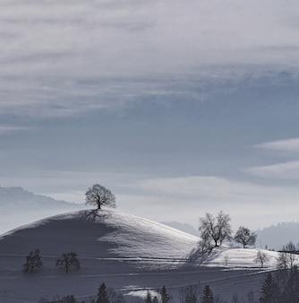 Kale bomen op besneeuwde grond onder witte bewolkte hemel overdag