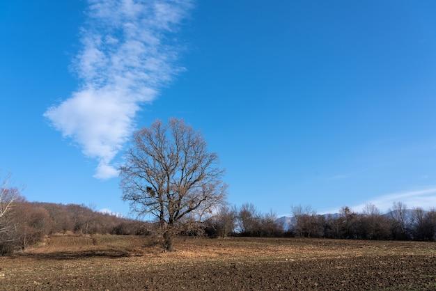 Kale boom op een boerenveld