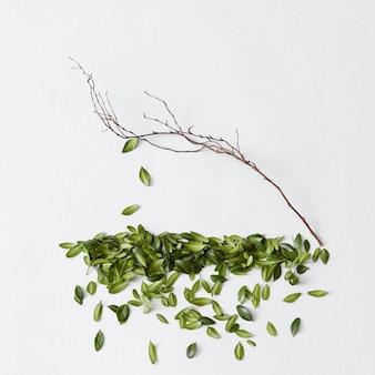 Kale boom zonder bladeren. mooie boom en groene bladeren worden apart weergegeven. close-up van boom met vallende bladeren.