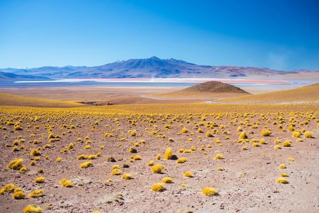Kale hooglanden op grote hoogte van de andes, een van de belangrijkste reisbestemmingen in bolivia.