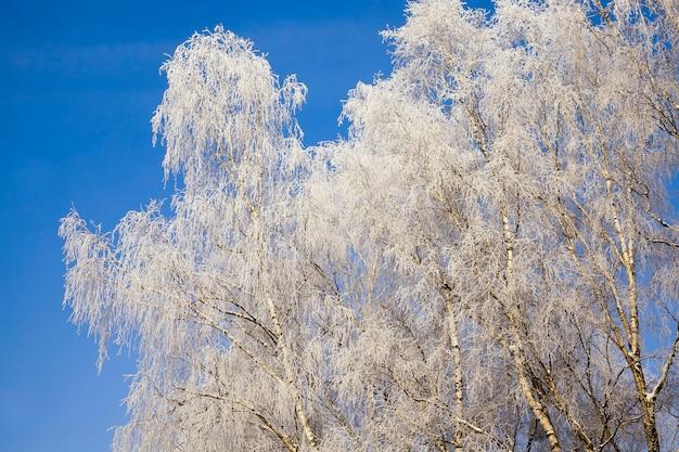 Kale loofbomen bedekt met een dikke laag sneeuw