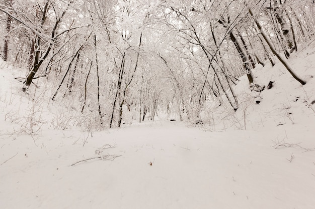 Kale loofbomen in de sneeuw in de winter