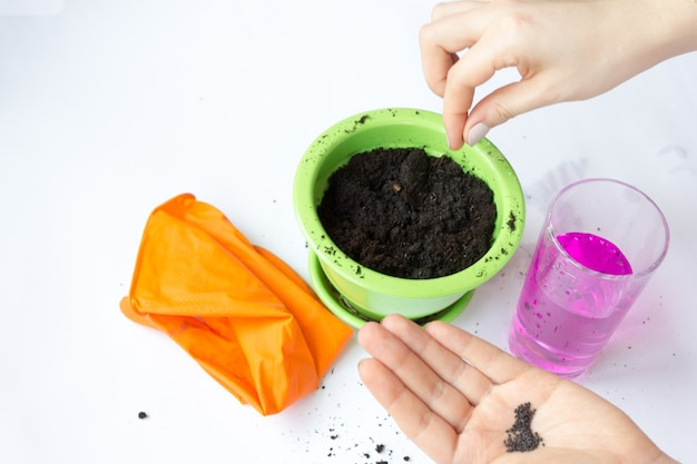 Kaliumpermanganaat, een roze vloeistof in een glazen beker. landteelt voor plantentransplantatie.