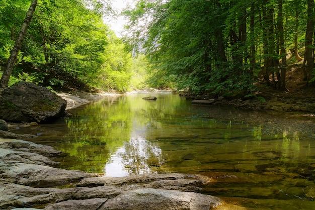 Kalm en kristalhelder water rivier in groen bos met reflecties van het daglicht en rotsen op de voorgrond.
