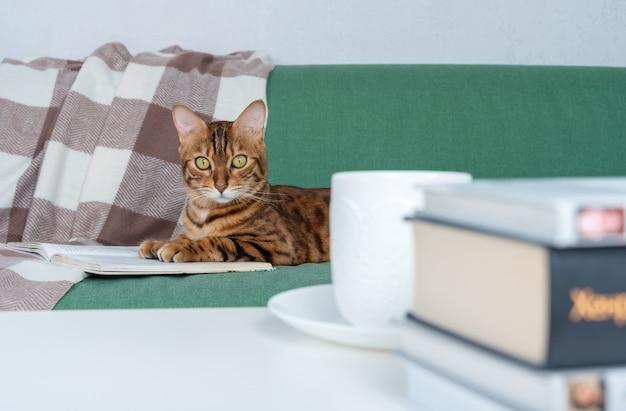 Kalme en ontspannen bengaalse kat rust op de bank met een boek, een kopje thee en een stapel andere boeken op de salontafel in de woonkamer