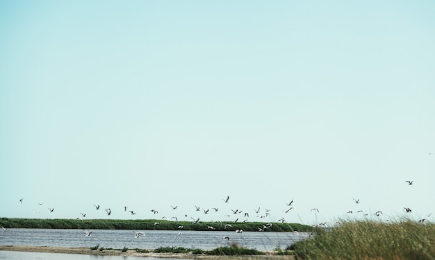 Kalme zee baai met vliegende meeuwen