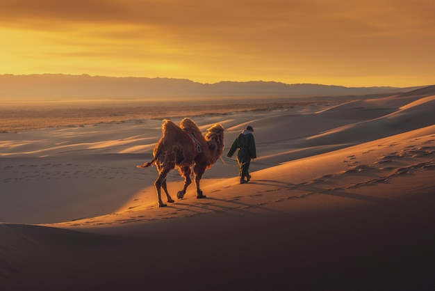 Kameel die door de zandduinen gaat bij zonsopgang, de woestijn mongolië van gobi.
