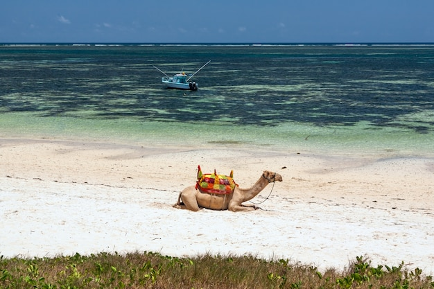 Kameel die op het zand ligt