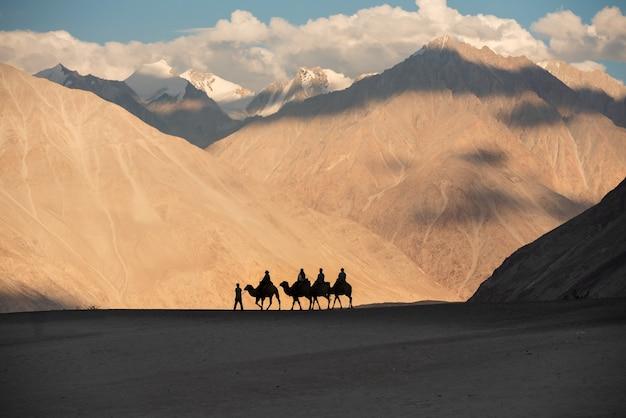 Kameel rijdt in nubra vallei in leh ladakh, jammu en kasjmir, india.
