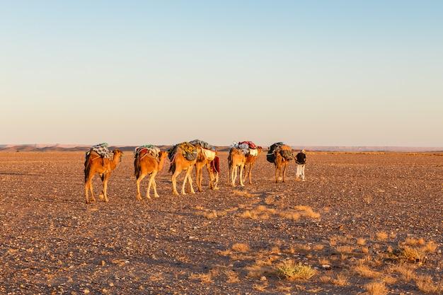 Kameelcaravan op de woestijn