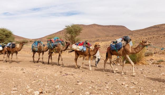 Kameelkaravaan die door de woestijn gaat