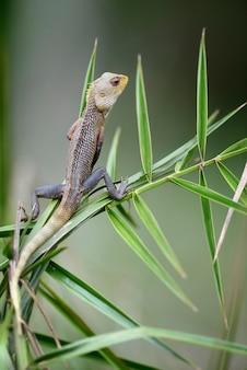 Kameleon bij boomtak in sri lanka