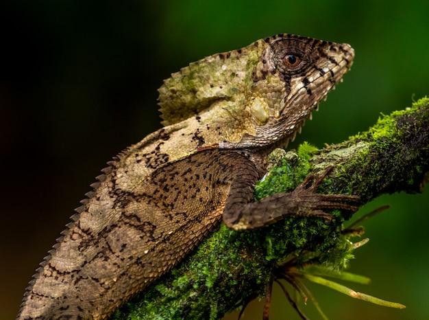 Kameleon dierlijk close-up