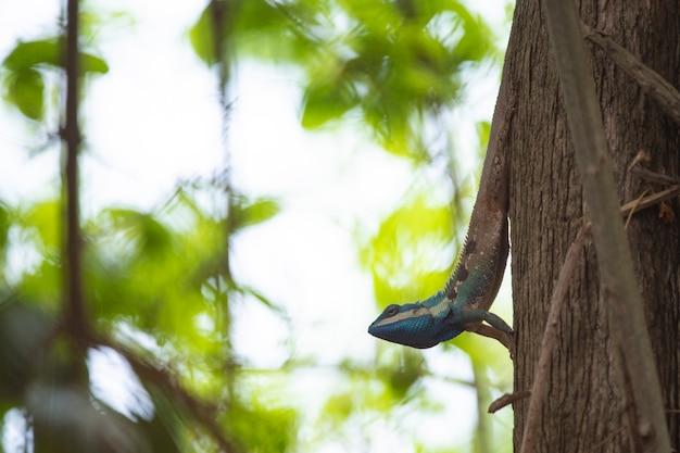 Kameleon, hagedis, soorten kameleon in tropisch bos