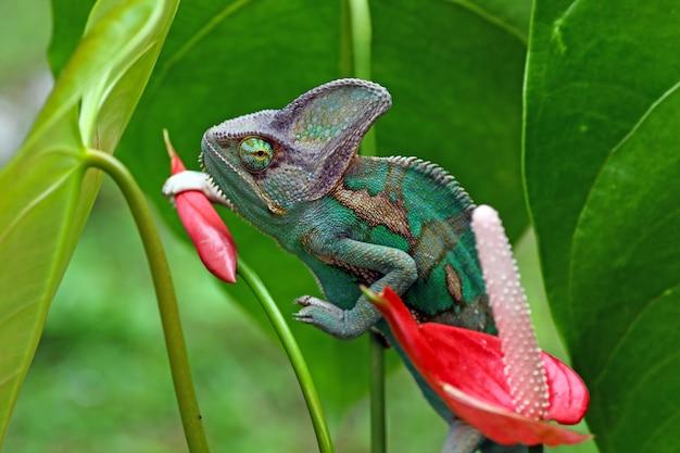 Kameleon houdt bloemknop vast