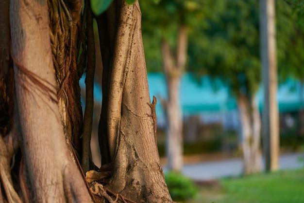 Kameleon klim op boomstam