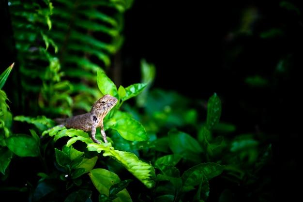 Kameleon op boom met schijnwerper op het, wildernisconcept