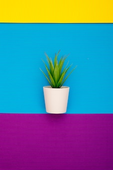 Kamerplant in een pot op een abstracte achtergrond van gekleurde vellen