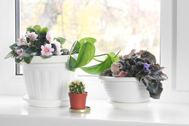 Kamerplant in een pot