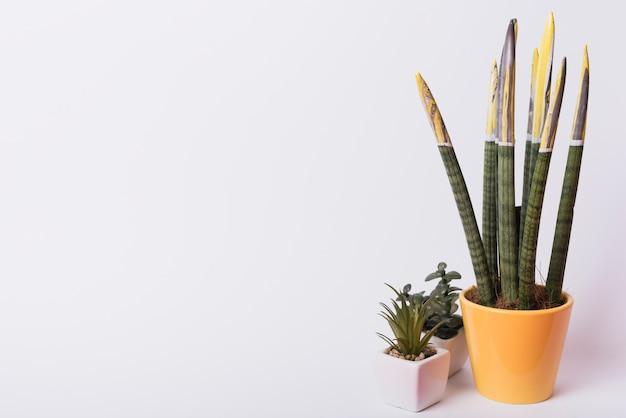 Kamerplant in potten tegen witte achtergrond