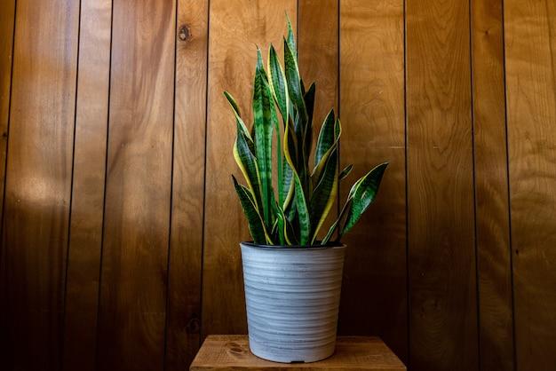 Kamerplant met lange bladeren in een pot tegen een houten wand onder de lampen