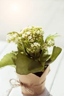 Kamerplant met witte bloemen in een pot van bruin kraftpapier