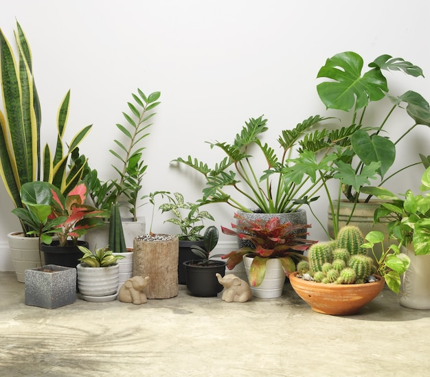 Kamerplanten in container op cementvloer en olifantenstandbeeld in kamerlucht zuiveren met monsteraphilodendron selloum cactusaroid palmzamioculcas zamifoliaficus lyratagevlekte betelslang plant