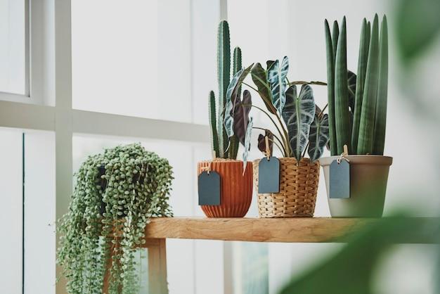 Kamerplanten in een bloemenwinkel