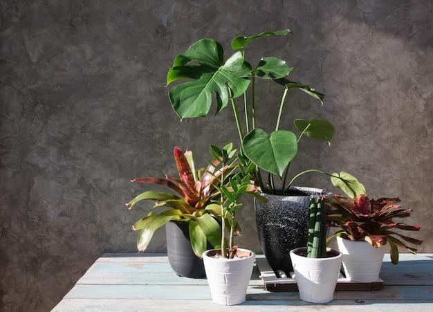 Kamerplanten in moderne stijlvolle container houten tafel met betonnen muur oppervlak luchtzuivering met monsteraphilodendron selloum aroid palmzamioculcas zamifoliaficus lyratabromelia in zonlicht