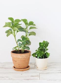 Kamerplanten in potten op witte houten vloer op witte muur als achtergrond
