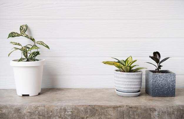 Kamerplanten luchtreiniger boom ficus elastica bourgondië of rubberplant dracaena surculosa en snake plant in moderne container