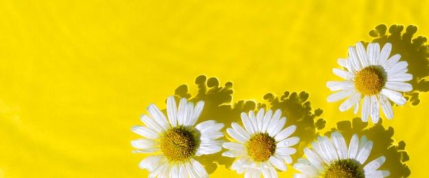 Kamille bloemen en water golf op gele water achtergrond. bovenaanzicht plat lag. banier. Premium Foto