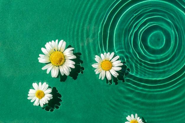 Kamille bloemen in groen water onder natuurlijk licht. bovenaanzicht, plat gelegd.