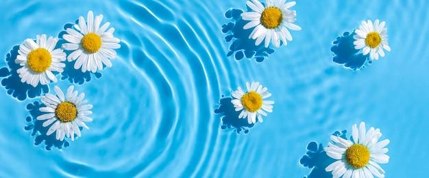 Kamille bloemen op een achtergrond van blauw water. bovenaanzicht, plat gelegd. banier.