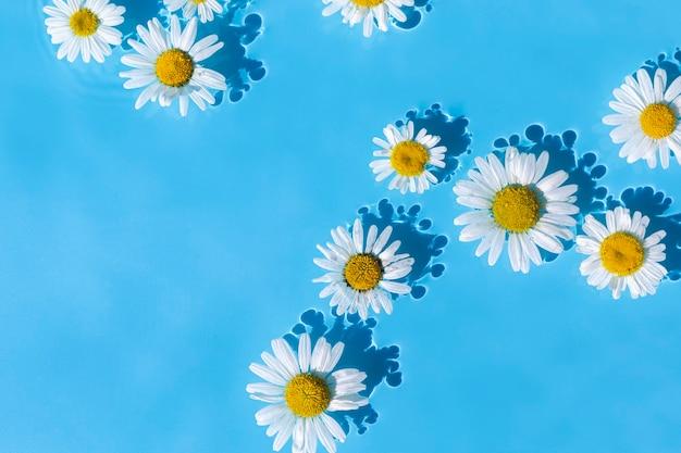 Kamille bloemen op een achtergrond van blauw water. bovenaanzicht, plat gelegd.
