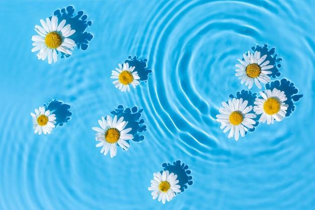 Kamille bloemen op een blauwe waterachtergrond met concentrische cirkels van een druppel. bovenaanzicht, plat gelegd