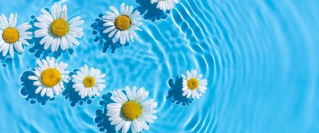 Kamille bloemen op een blauwe waterachtergrond met concentrische cirkels van een druppel. bovenaanzicht plat lag. banier.
